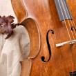 Details of a violoncello on beige background - Stock Photo