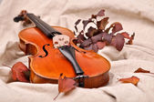 Isolated violin and autumn leaves on brown background — Foto Stock