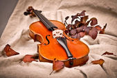 Isolated violin in fall season — Stock Photo