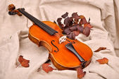 Violin and autumn leaves — Stock Photo
