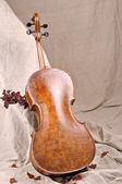 Violoncello back and autumn leaves — Stock Photo