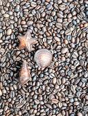 Bombones con granos de café como telón de fondo — Foto de Stock