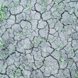 Fragment of cracked dry land with green grasses between, new lif - Stock Photo