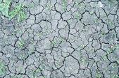 Frammento di terra asciutta cracking con erbe verde tra, nuova lif — Foto Stock