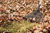 Cleaning with rake of autumn leaves in park — Stock Photo