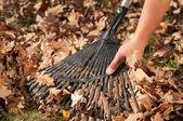 Man raking leaves in the garden — Stock Photo