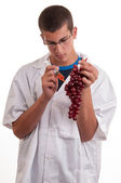 Experiments with grapes fruits in laboratory — Foto de Stock
