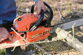 Man cuts tree with chainsaw, concept of deforestation. Selective — Stockfoto