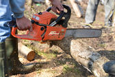 Man cuts tree with chainsaw, concept of deforestation. Selective — Stock Photo