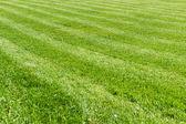 Natural green grass field background, fresh cut  — Zdjęcie stockowe