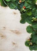 Bakgrund av blad och frukter av jordgubbar på trä — Stockfoto