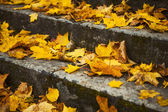 Steps in the yellow leaves in autumn — Stock Photo