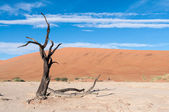 Sossusvlei, Namibia — Stock Photo