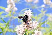 巨大的 bug,对一朵花 — 图库照片