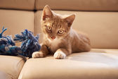 Red kitten on couch — Stock Photo