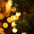 Bright Holiday Christmas Lights with Pine Tree Branch Silhouette — Stock Photo