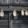 Stock Photo: Dried fish. Fish drying in sun