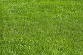 草坪、 草、 外地 — 图库照片