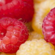 Raspberry — Stock Photo #31387949