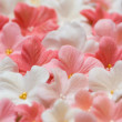 Sugar paste flowers — Stock Photo