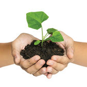 Hand holding a tree for giving life to the Earth isolated over w — Stock Photo
