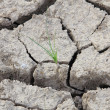 Small tree in crack soil — Stock Photo