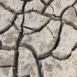 Crack of soil texture — Stock Photo