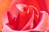 Hintergrund mit rote rose vektor — Stockvektor