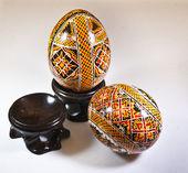 鶏の卵 — ストック写真