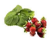 Fresh red ripe strawberries — Stock Photo
