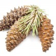 Fir cones — Stock Photo #48241953