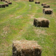Square Hay Bales — Stock Photo