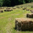 Square Hay Bales — Stock Photo #26970721