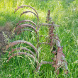 Stock Photo: Old Cultivator Buried in Grass