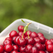 freshly picked red cherries in a зplastic crate — Stock Photo