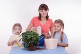 Family room flower transplants — Stok fotoğraf