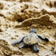 Born of turtle — Stockfoto