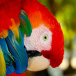 Stock Photo: Macaw