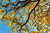 Yellow tree — Stock Photo