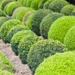 Green garden balls in France, Boxwood — Stock Photo