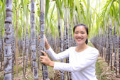 Woman hike in sugarcane plants — Stock fotografie
