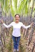 Woman hike in sugarcane plants — Stockfoto