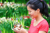 Asian woman with rhizome of daffodil flowers — Stock Photo