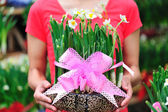 Young asian woman with daffodil flower potting — Stock Photo