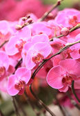 Purple orchid flowers — Stock Photo