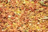 Chinese herb — Stock Photo