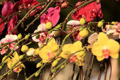 Colorful orchids — Stock Photo