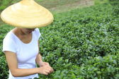 Young asian woman picking tea leaves — Stock Photo