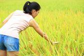 Kobieta w polu pszenicy — Zdjęcie stockowe