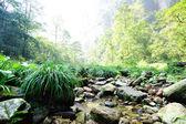 Golden whip brook in zhangjiajie national forest park — Stock Photo